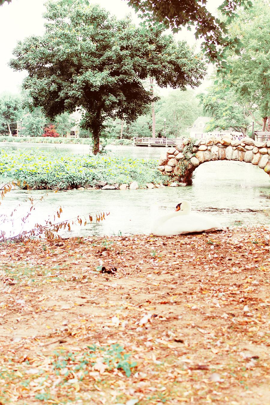 Swancorner